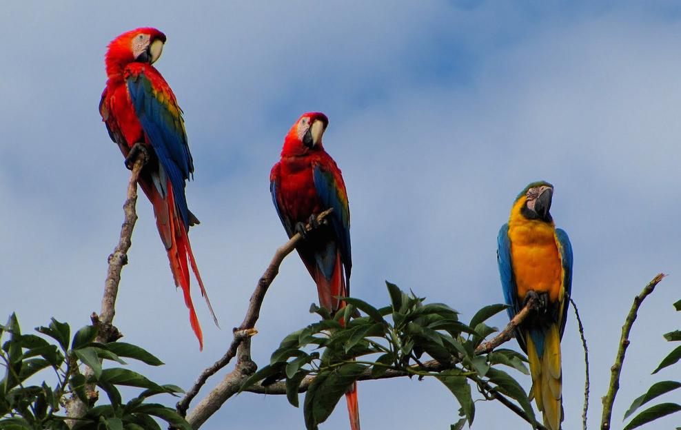 Macaws at Villa Carmen Tejedor