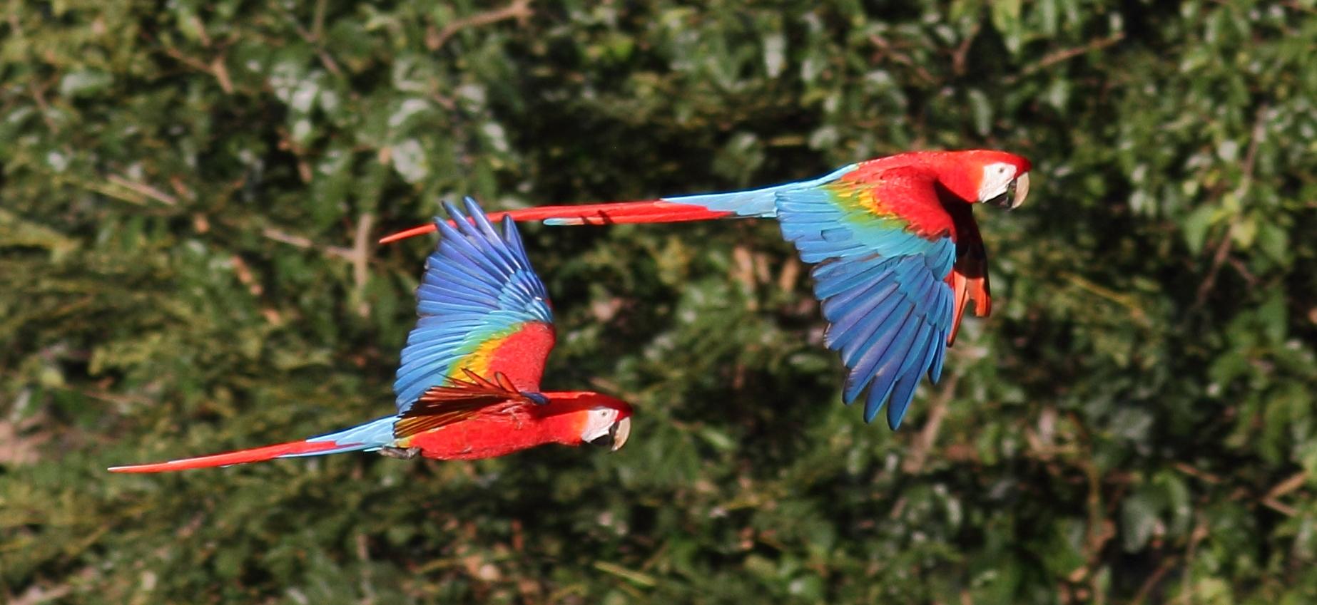 Los Amigos Bird Observatory Blog | Amazon Conservation Association
