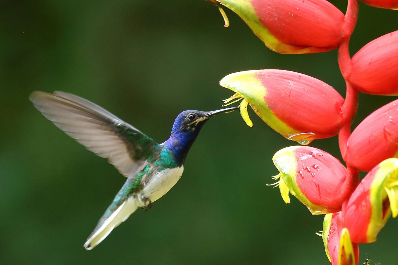 Make your New Year's resolution to travel more come true: Visit the best birding lodges in Peru!