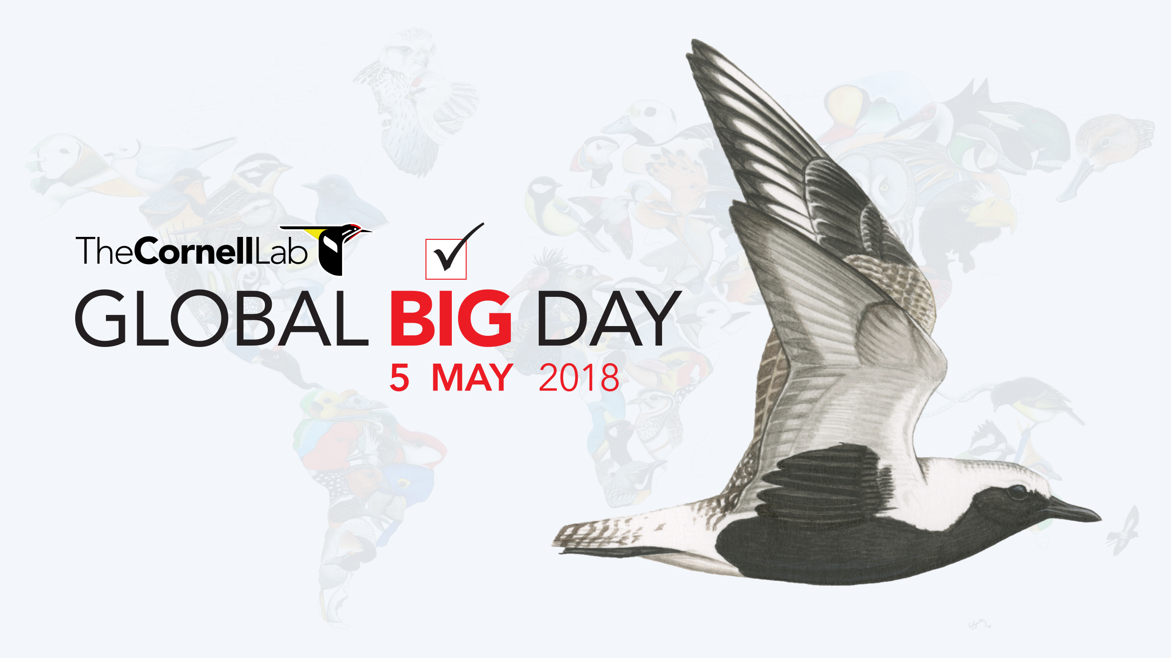 Global Big Day is just around the corner! Let's break a record!